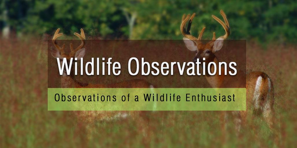 Wildlife Observations